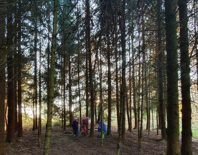 ApeArt Projekte ~ NaturSinn & WaldArt